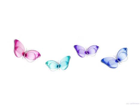 Butterfly ll :: 4Butterflies