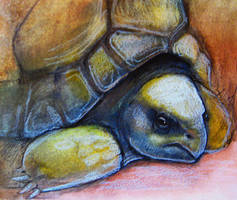 The Grumpiest Tortoise by Gwydd