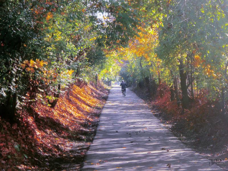 Autumn II by Andaelentari