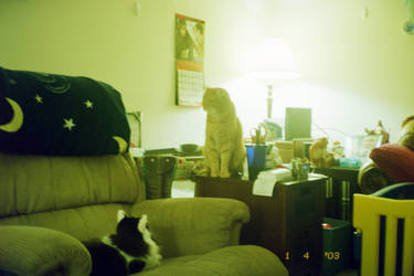 worshipping the cat god