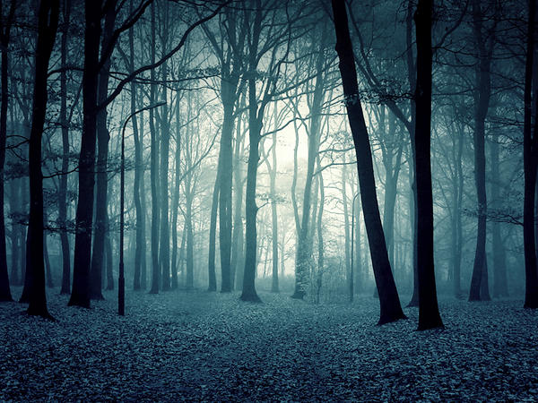 خلفيات دمج ستوكات دمج خلفيات غابة ستوكات غابة خلفيات دمج twilight_forest_premade_by_i_am_jenius-d4n08to.jpg