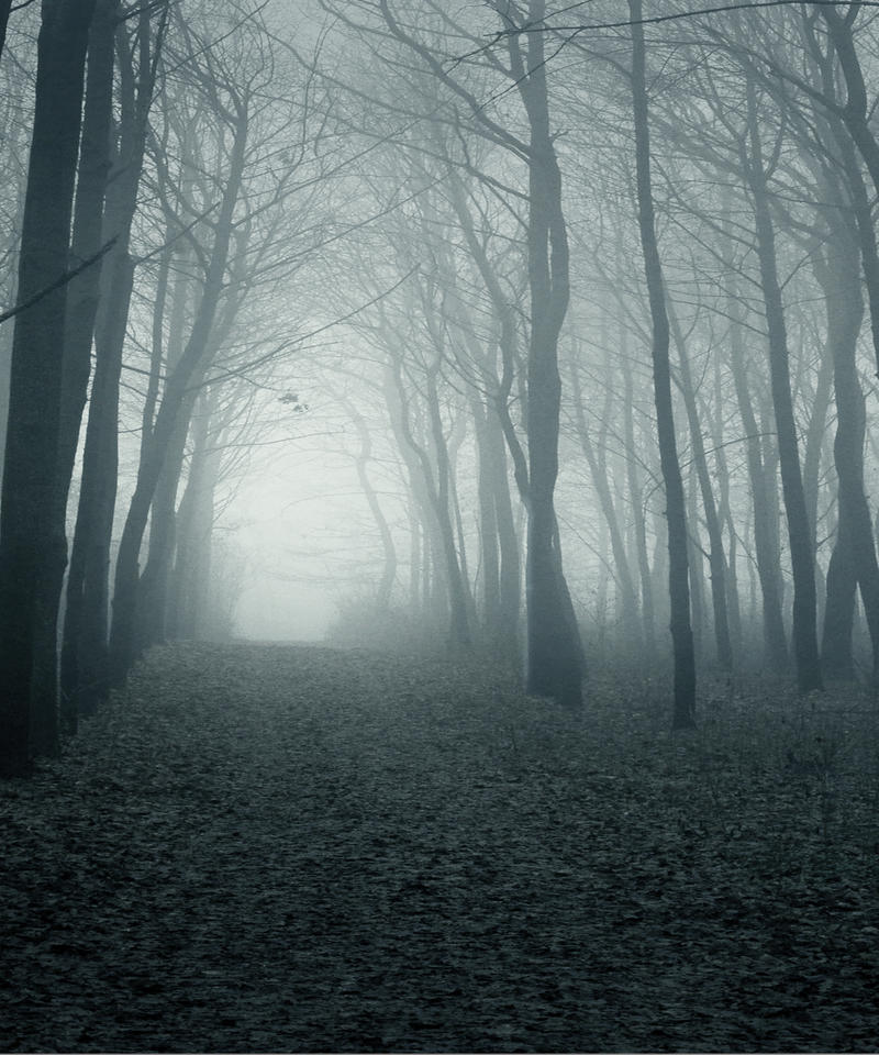 Woodland stock by i am jenius on deviantart - Wallpaper pictures ...