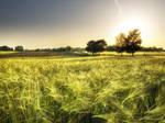 Summer wheatlands pt.I.
