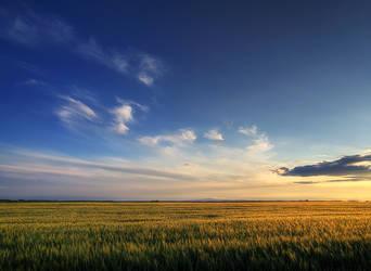 Summer wheatlands pt.II. by realityDream