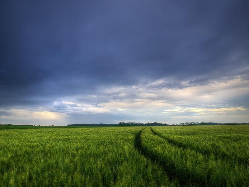 Summer wheatlands pt.III. by realityDream