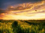 Summer wheatlands pt.IV.