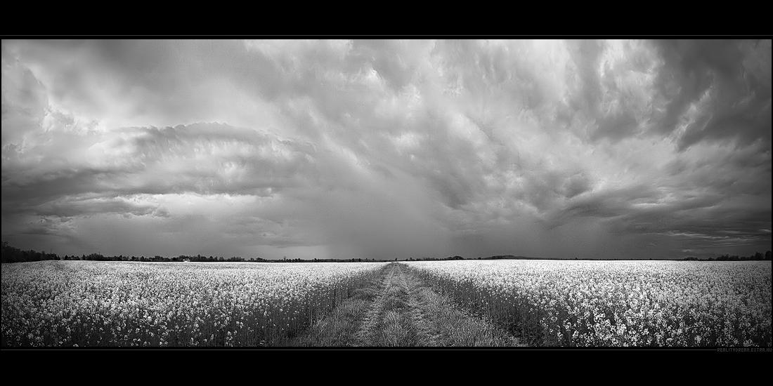 The grim fields by realityDream