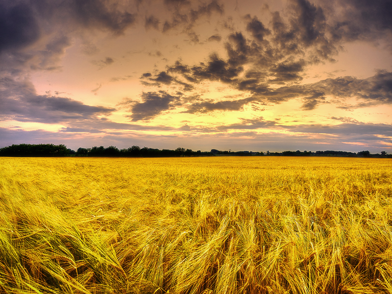 Summer wheatlands pt.VI. by realityDream