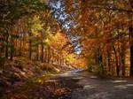 Autumn journey pt.II.