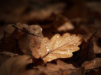 Autumn remembrance