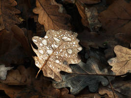 Autumn remembrance II