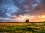 Summer wheatlands pt.VII.