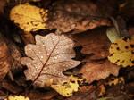 Autumn remembrance 3