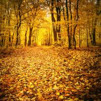 Autumn walk IV. by realityDream