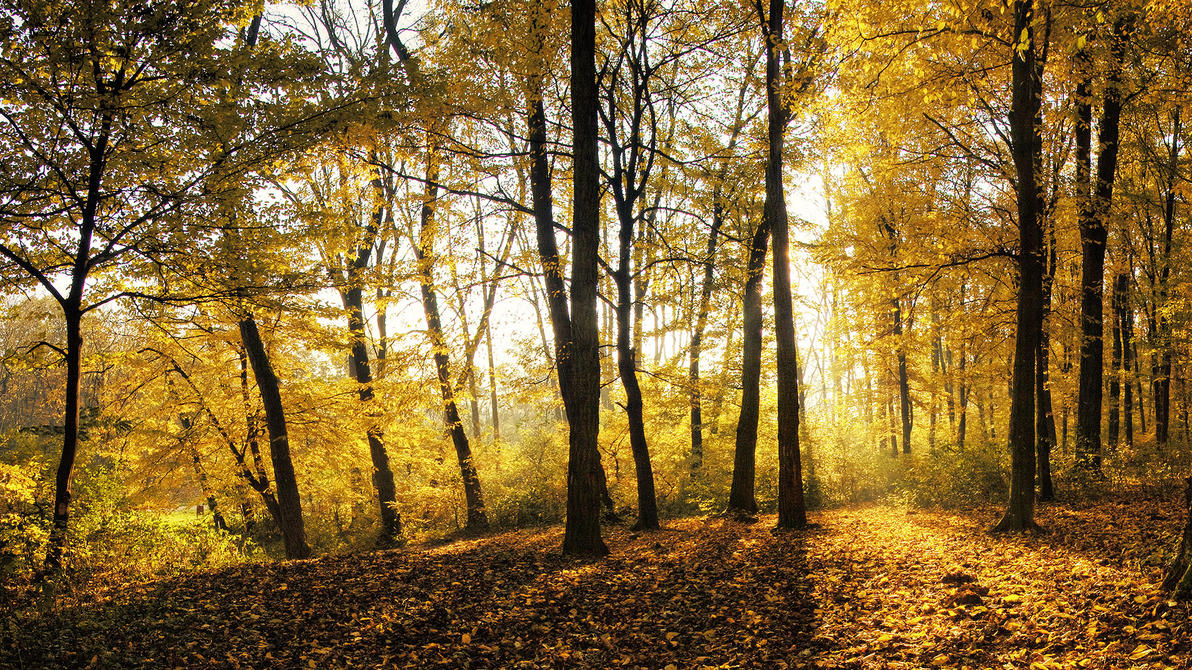 Golden forest HD wallpaper by realityDream
