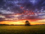 Summer wheatlands pt.IX.