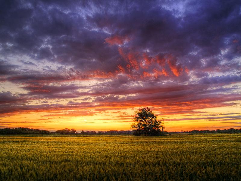 Summer wheatlands pt.IX. by realityDream
