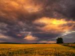 Summer wheatlands pt.XI.