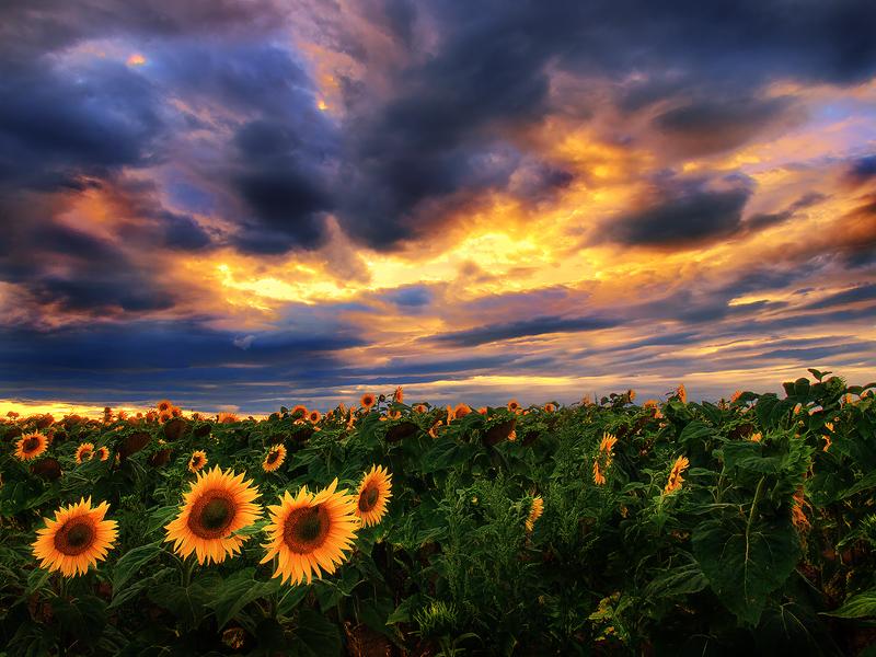 Sunstorm II. by realityDream