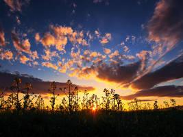 Canola sunrise by realityDream