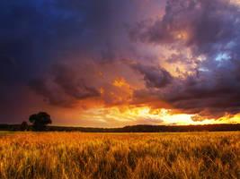 Summer wheatlands pt.XIV. by realityDream