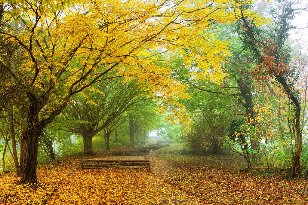 Autumn walk pt.VI. by realityDream