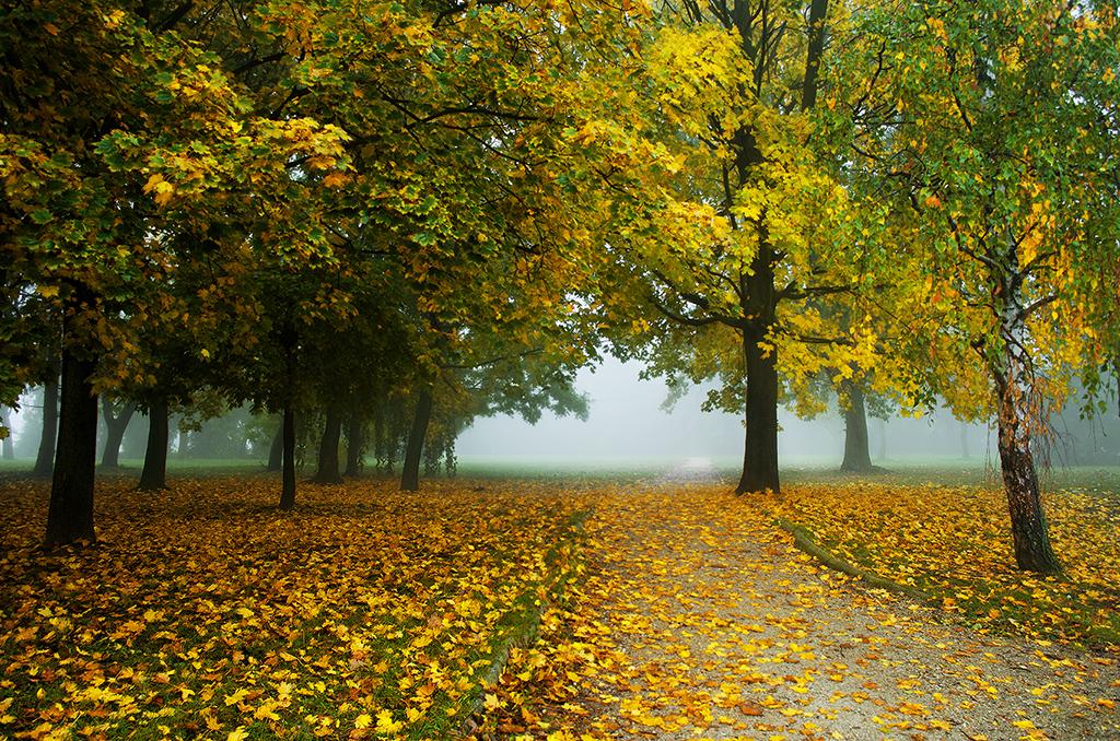 Autumn walk pt.VII. by realityDream