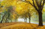 Autumn walk pt.VIII.