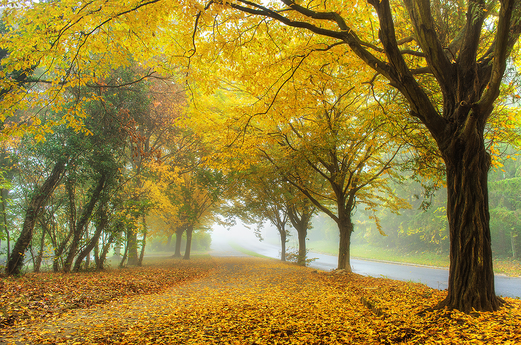 Autumn walk pt.VIII. by realityDream