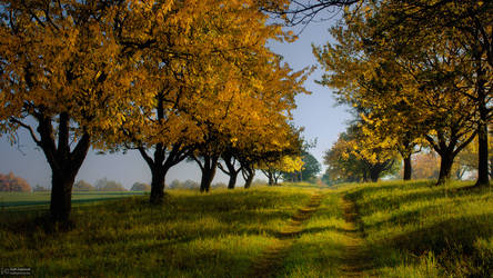 Autumn garden by realityDream