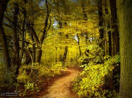 Autumn walk pt.IX. by realityDream