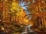 Autumn journey pt.XI.