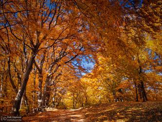 Autumn walk pt.X. by realityDream