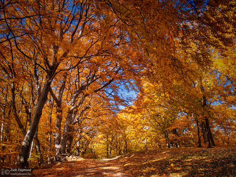 Autumn walk pt.X.