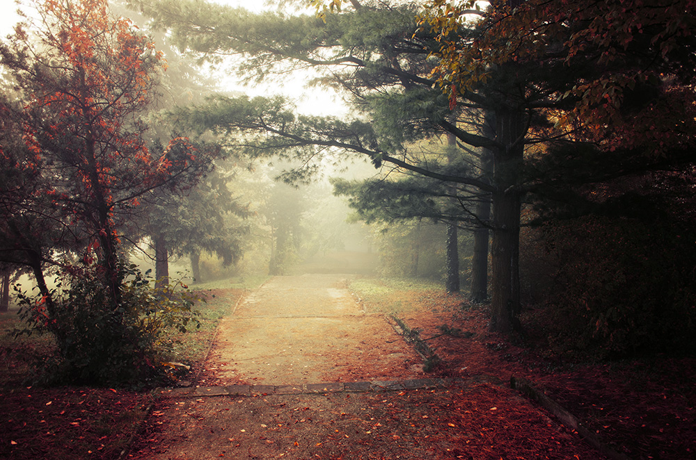 Autumn Walk pt.XIII. by realityDream