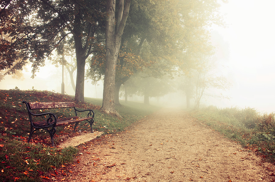 Autumn Walk pt.XIV. by realityDream