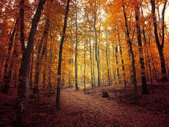 Autumn Walk pt.XV. by realityDream
