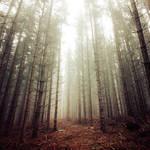 The Arcane Woods of Kendig