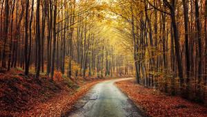 Autumn Journey pt.XIV.