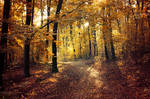 Autumn Walk pt.XVI.
