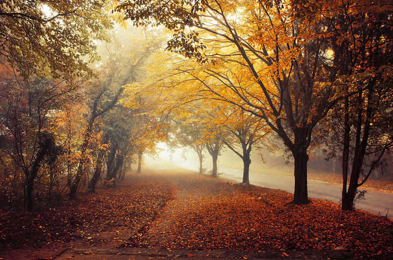 Autumn Walk pt.XVIII. by realityDream