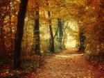Autumn Walk pt.XXI.