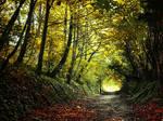 Autumn Walk pt.XIX.