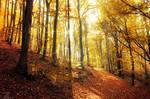 Autumn Walk pt.XXII. by realityDream