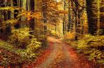 Autumn Walk pt.XXIII.
