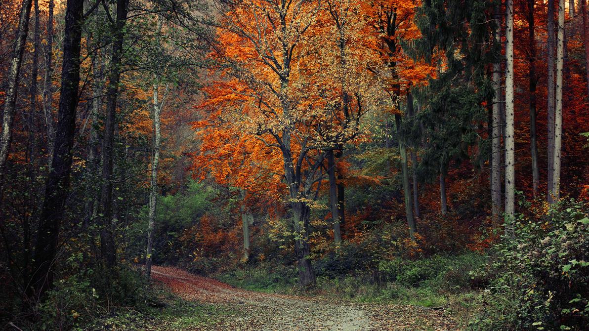 Fall Impressions I. by realityDream