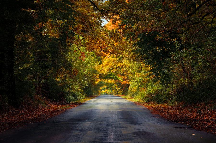 Autumn Journey XX. by realityDream