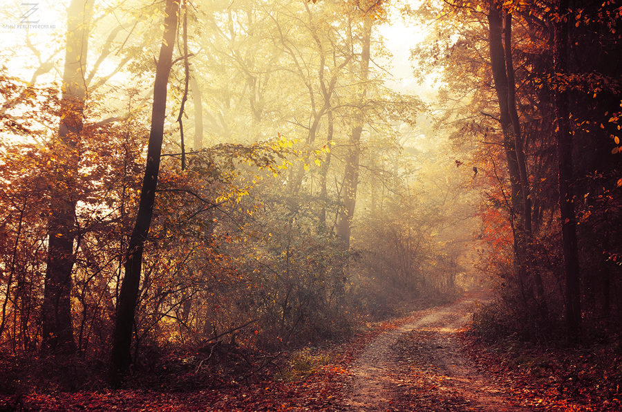 Autumn Walk XXIV. by realityDream