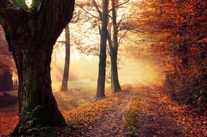 Autumn Walk XXV. by realityDream