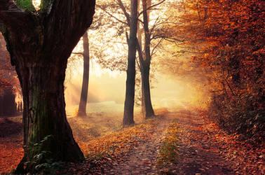 Autumn Walk XXV. by realityDream
